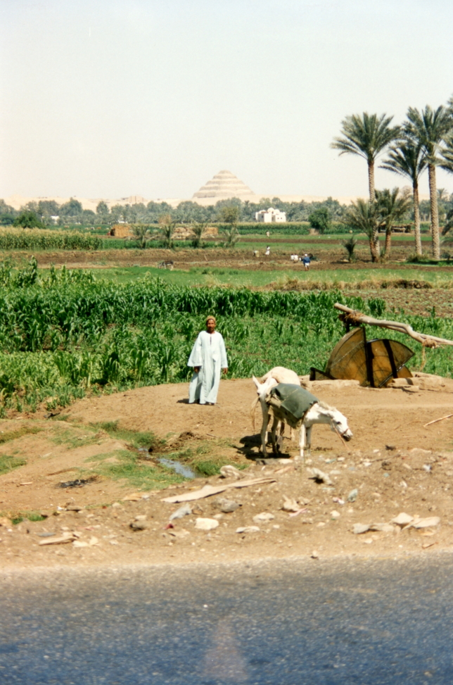 Farmer (outstanding in his field!) with the step pyramid of Sakkarah beyond