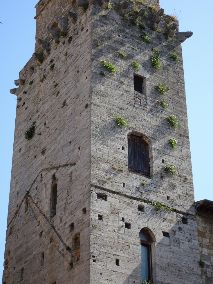 Clumps of vegetation clinging to a tower for dear life