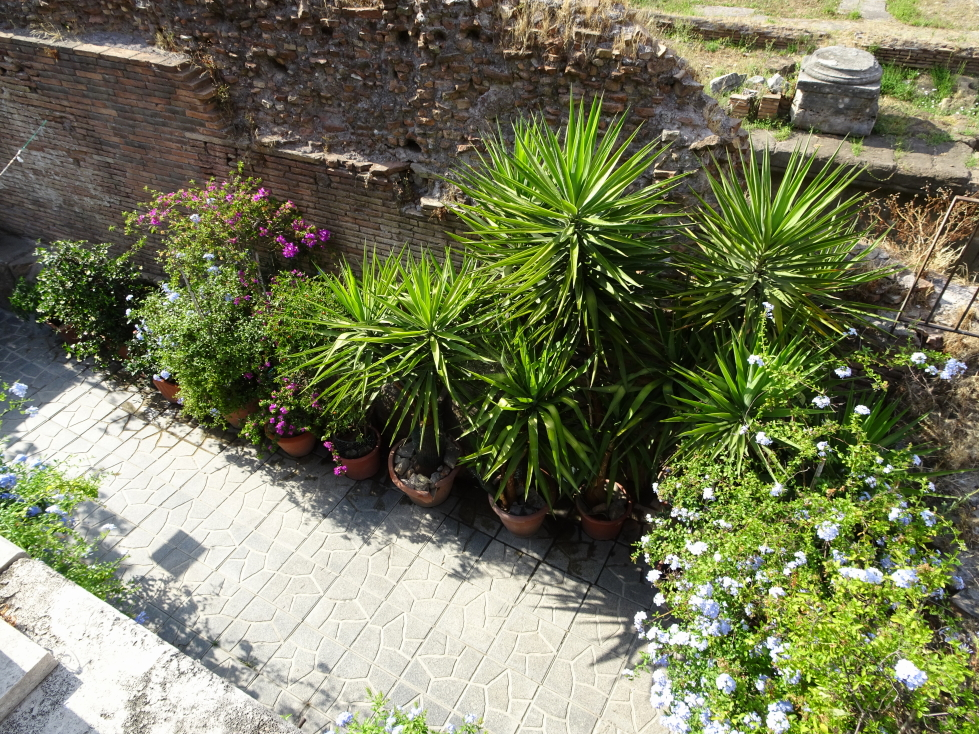 Pretty plants at Largo di Torre Argentina
