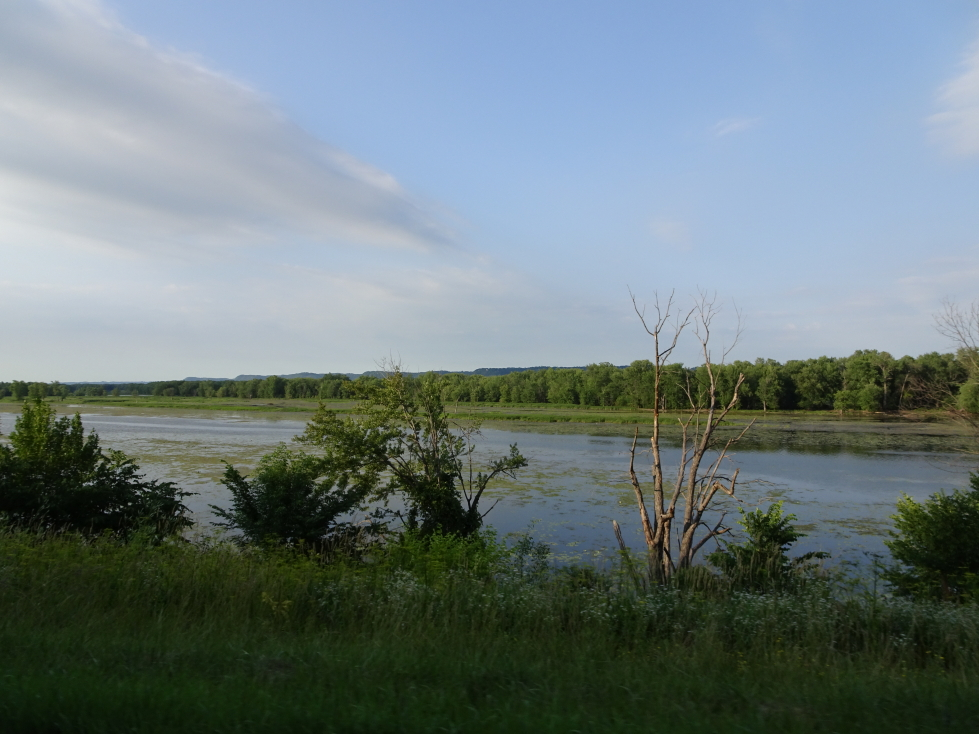Marshy land on the banks of the Mississippi