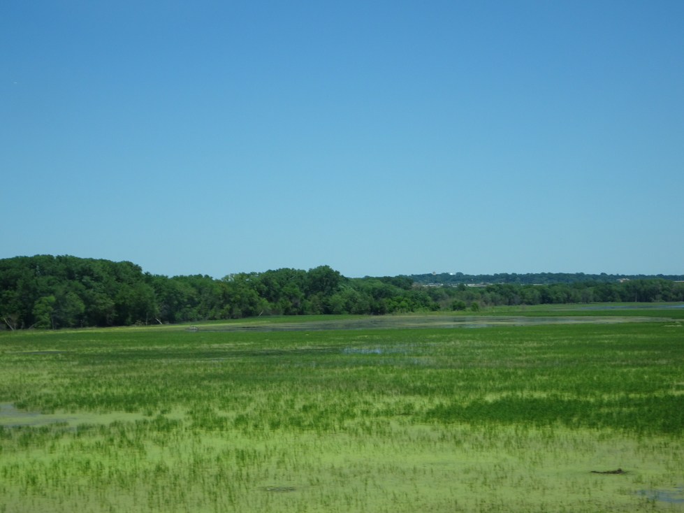 Marsh just south of the Twin Cities