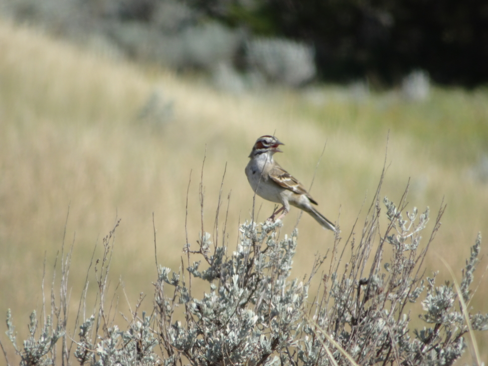 A bird in Theodore Roosevelt NP