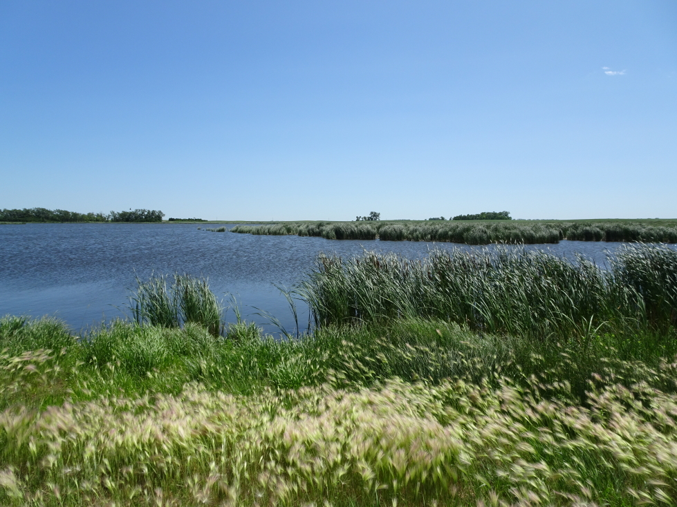 One of numerous lakes in northeastern North Dakota